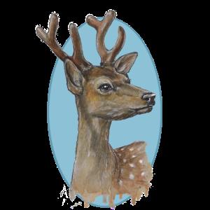 Junger Hirsch - mit sanftem Blick