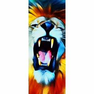 close up lion roar 03 b