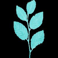 Blatt Ast / Blätter Buche Wald