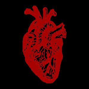 Vintage Herz Anatomie Aorta Mediziner Geschenk