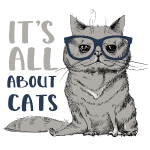 Coole Katze: It's All About Cats