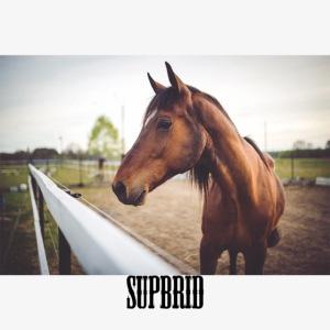 horsesupbrid