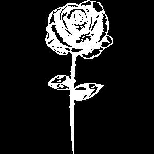 rose blume