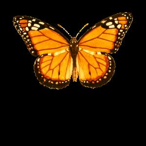 Schmetterling Lepidoptera Insektenkunde