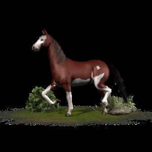 Pferd - braunes Pferd - Hengst - Stute