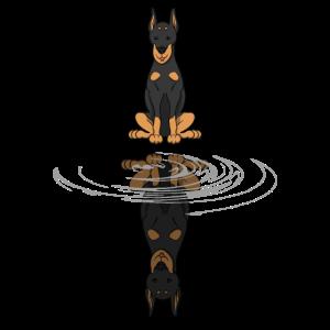 Dobermann Hund Wasser Spiegelbild Geschenk