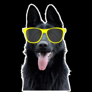 Party Hund mit Sonnenbrille