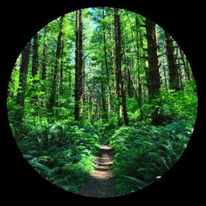 Wald Wälder Bäume Natur grün Waldweg Waldboden