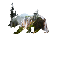 bär grizzly natur outdoor wald klettern zelten ber