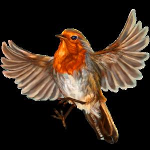 Rotkehlchenvogel