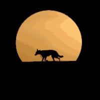 german shepherd in Sunrise Sunset