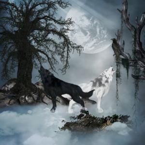 Erstaunlicher Schwarzweiss-Wolf