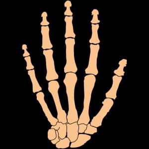 Hand Anatomie Knochen Physiotherapie Evolution