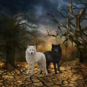 Ehrfürchtiger Wolf in Schwarzweiss.