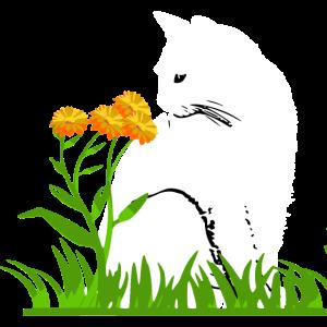 Süße Katze Mieze Kätzchen Blume nettes Geschenk