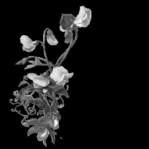 blume Blumenstrauss Botanik botanisch