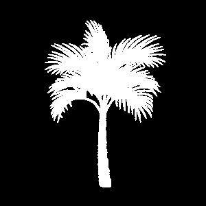 Palme Tropisch Weiß