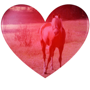 Pferdeliebe Herz doppelbelichtung