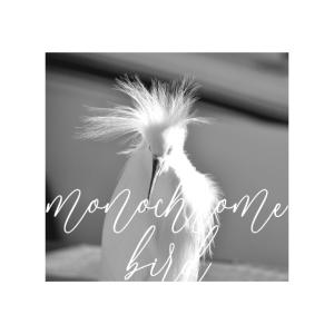 monochrome bird