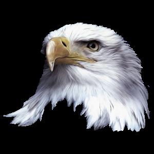 Tier,Tiere,Vogel,Adler,See Adler,Natur,Umwelt,Kopf