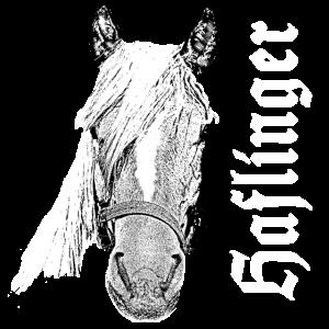Haflinger,Pferd,Pferde,Pferdekopf,Haustier,Tier,