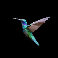 Kolibri Polygon Kolibri