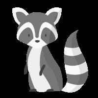 Waschbär - Racoon