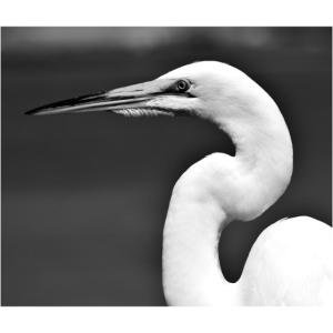 Bird right
