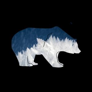Bär Eis Natur Tier schön wild