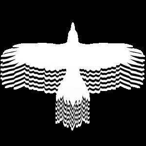 Krähe Rabe Mystisch patterncontest outdoor Natur