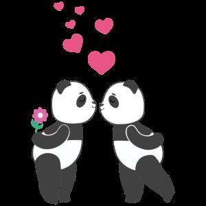Liebende Pandas Valentinstag
