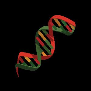 DNS DNA Strang Logo Bunt