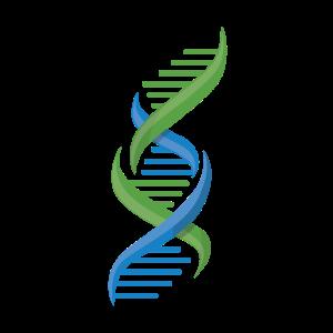 DNS DNA Strang Logo Blau Grün