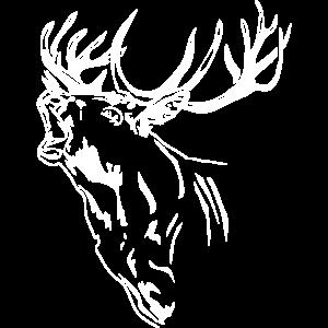 Hirsch - Geweih - Rotwild - Deer - Jagd