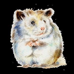 HAMSTER - der Hamster