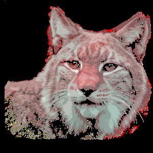 das wilde tier Luchs Wildkatze