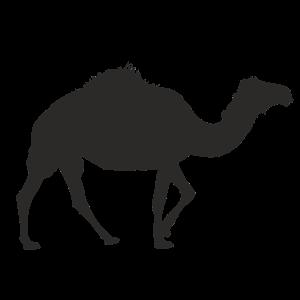 kamel CAMEL DROMEDAR Wüstenschiff