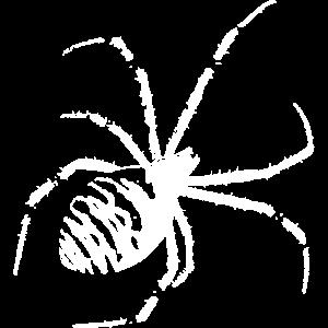 Wespenspinne Spinne weiß