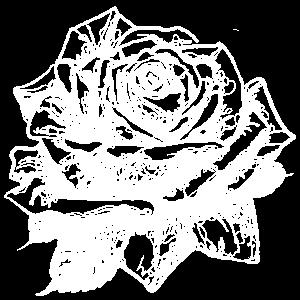 rose no2