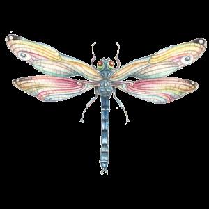 Libelle No1 - Regenbogenlibelle - Regenbogen -