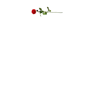Bachelorette Party Rose