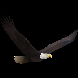Adler Vogel Weißkopfseeadler Freiheit Polygon Tier
