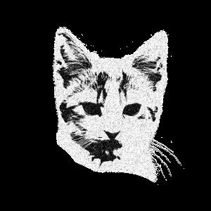 Katzengesicht, Katze schwarz-weiß, Kätzchen