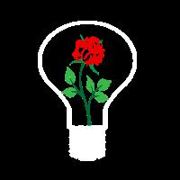 rose in der lampe Glühbirne Liebe Geschenk