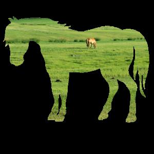 Pferd auf der Weide - Weite grüne Wiesen