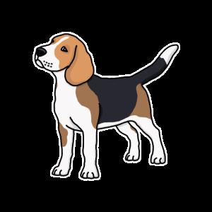 Beagle, Hund, Hunderasse, Rasse, Zeichnung, Comic
