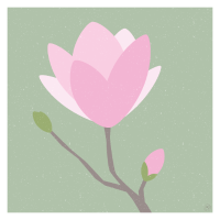 Magnolie - Poster