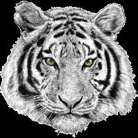 Tiger Löwe Lion Geschenk