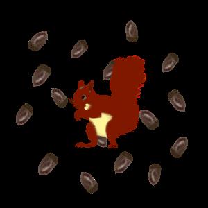 Eichhörnchen mit Eicheln