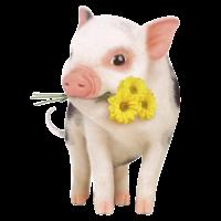 Das nette Schwein, das ein gelbes Blumen T-Shirt trägt